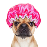 dog-shower-cap-copy.png